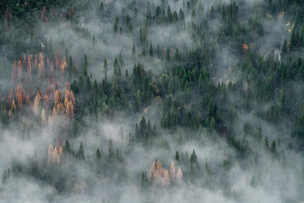 Why Yosemite? -