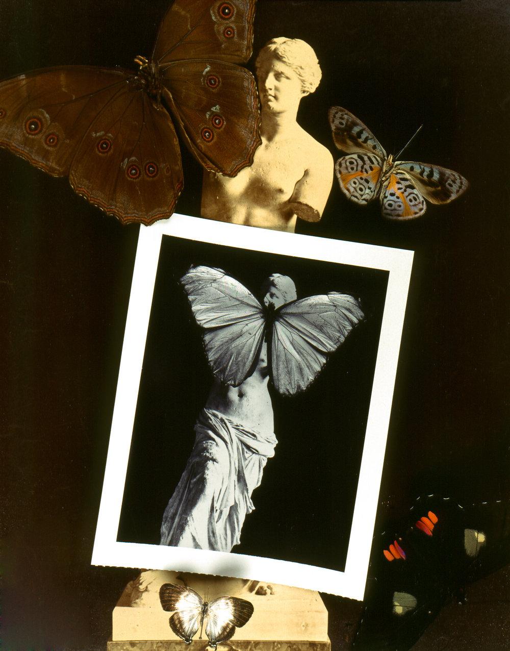 butterfly polaroid_.jpg