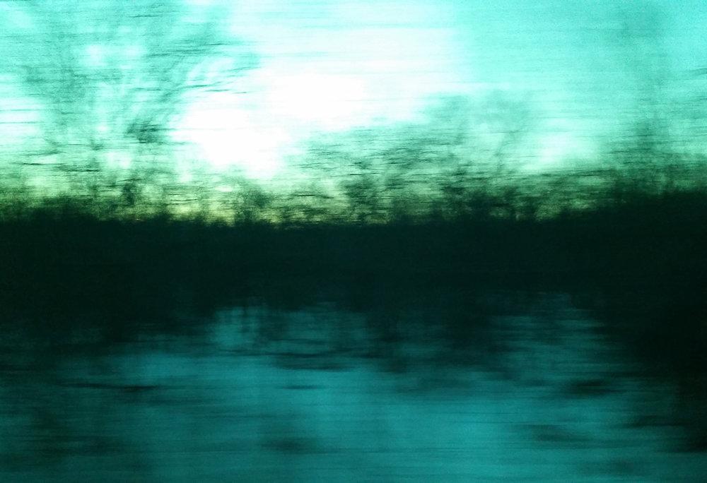 trees_in_the_wind.jpg