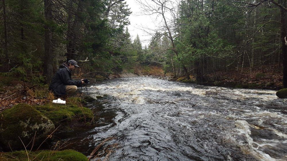 Measuring the health of Linton Stream