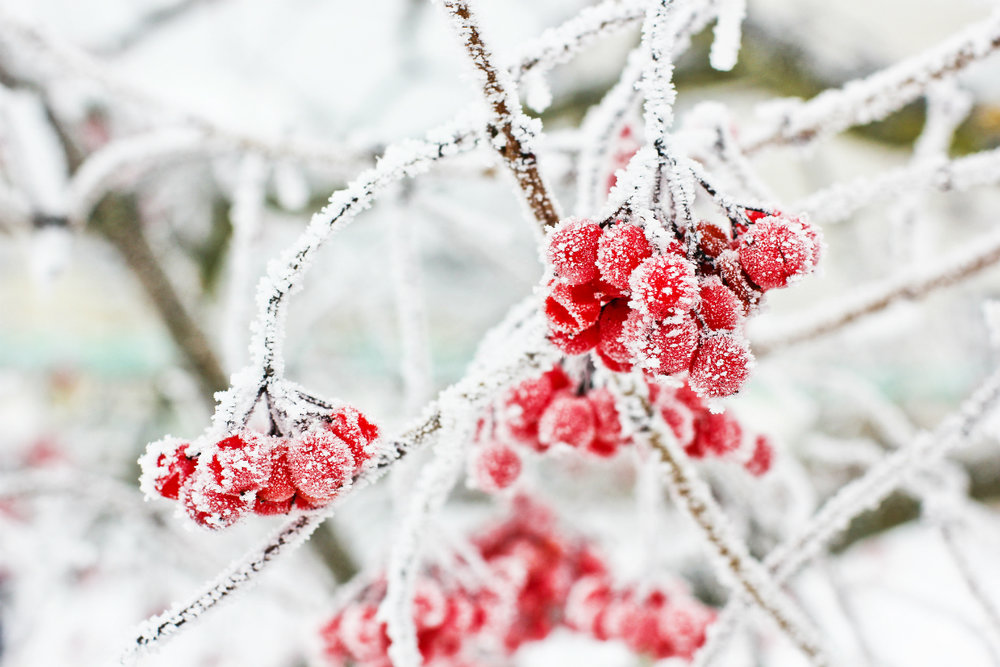 Winter Landscaping Do's and Don'ts in Hillsborough County, NH