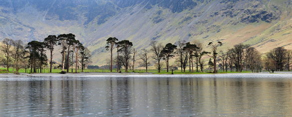 Buttermere Trees