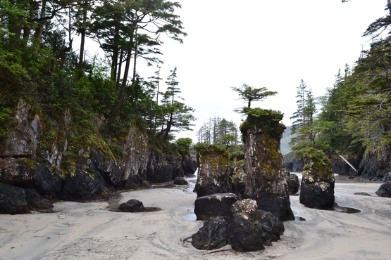 The sea stacks at San Josef Bay in Cape Scott Provincial Park.