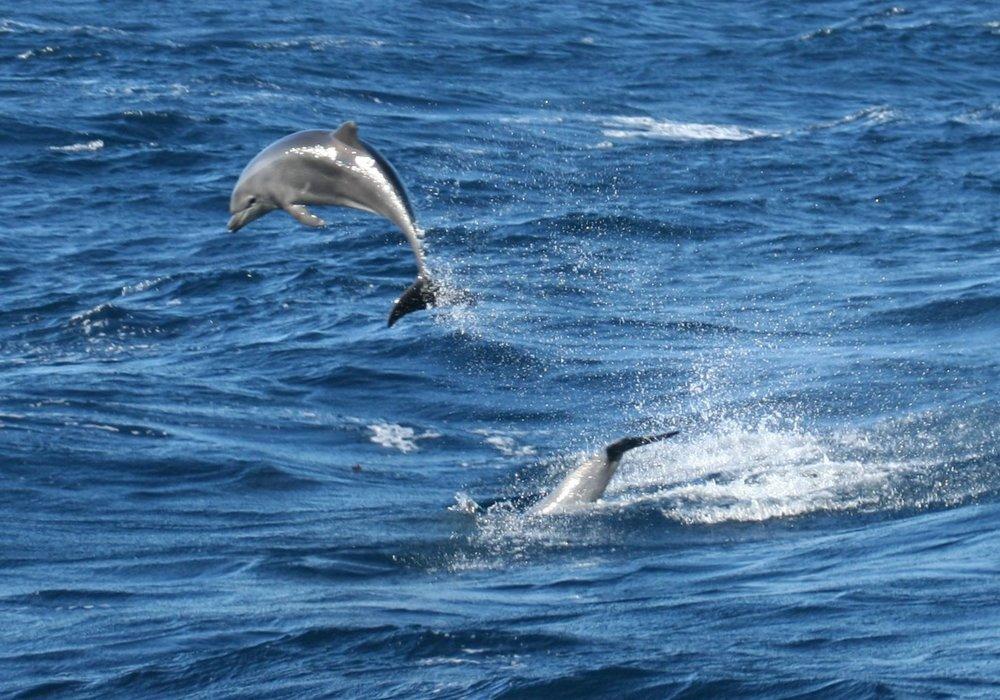 dolphins3.jpg