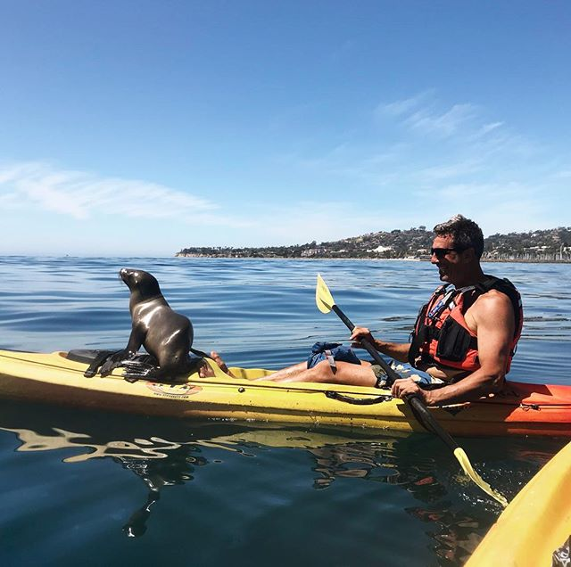 🔹 Baby Sea Lion !! 🔹. . We welcomed this adorable, unexpected guest on our Wildlife and History tour- what a perfect addition! He happily soaked up the warmth of the sunshine while cruising around with us for about half an hour. We live for these beautiful, organic moments of pure connection with the wild and natural world 💙🌊🦁. . . #kayaking #santabarbara #seesb #sbharbor #sboceanlife #paddlesports #kayak #wildlife #wildlifephotography #wildlifeencounters #california #sealion #naturephotography