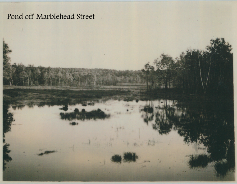 #16 Pond off Marblehead Street.png