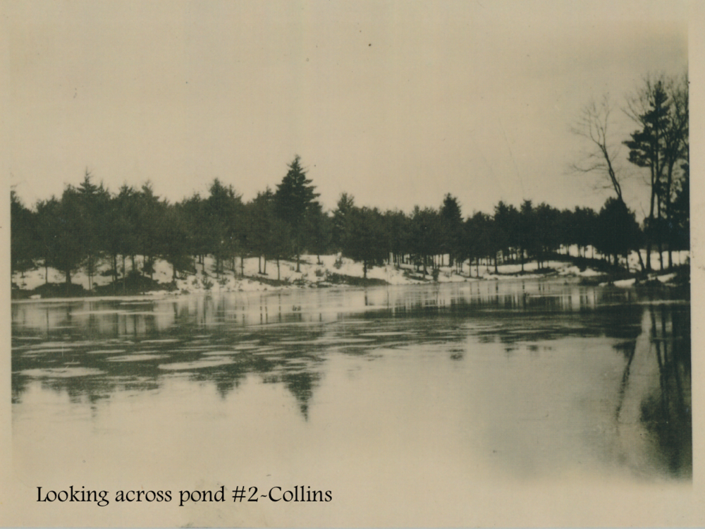 #19 Looking across pond #2-Collins.png