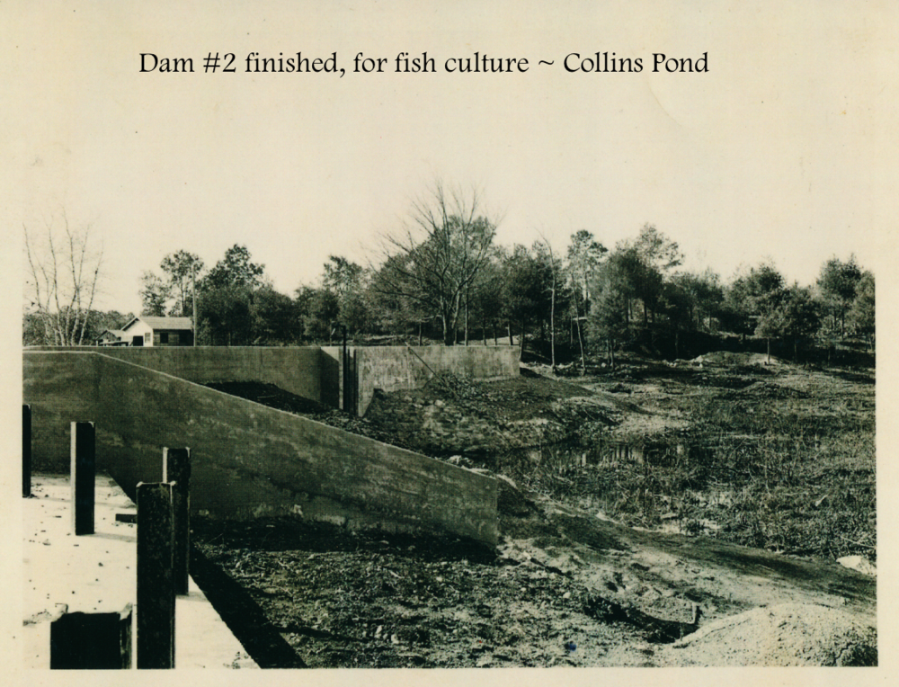 #29 Dam #2 finished Collins.png