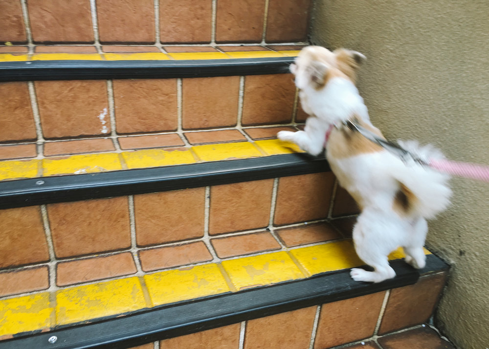 Dali racing up the stairs