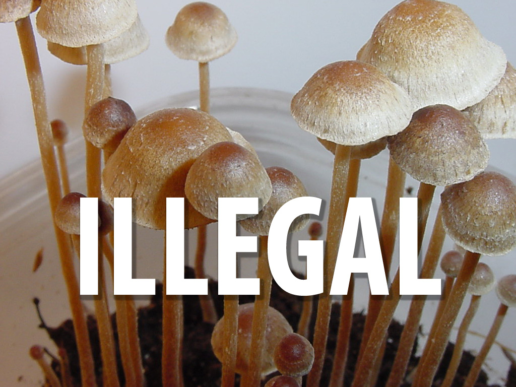 Psilocybin mushrooms are illegal to possess or consume in the U.S.