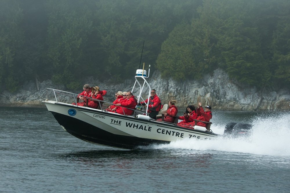 Tofino Whale Watching