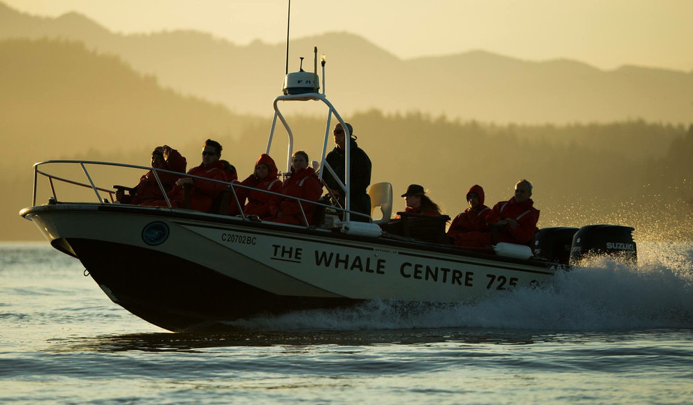 Tofino Whale Watching Tours