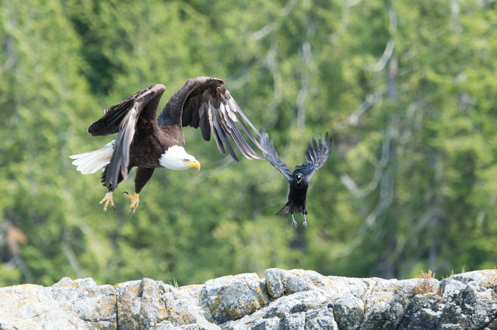 Bird Watching Tours, Tofino