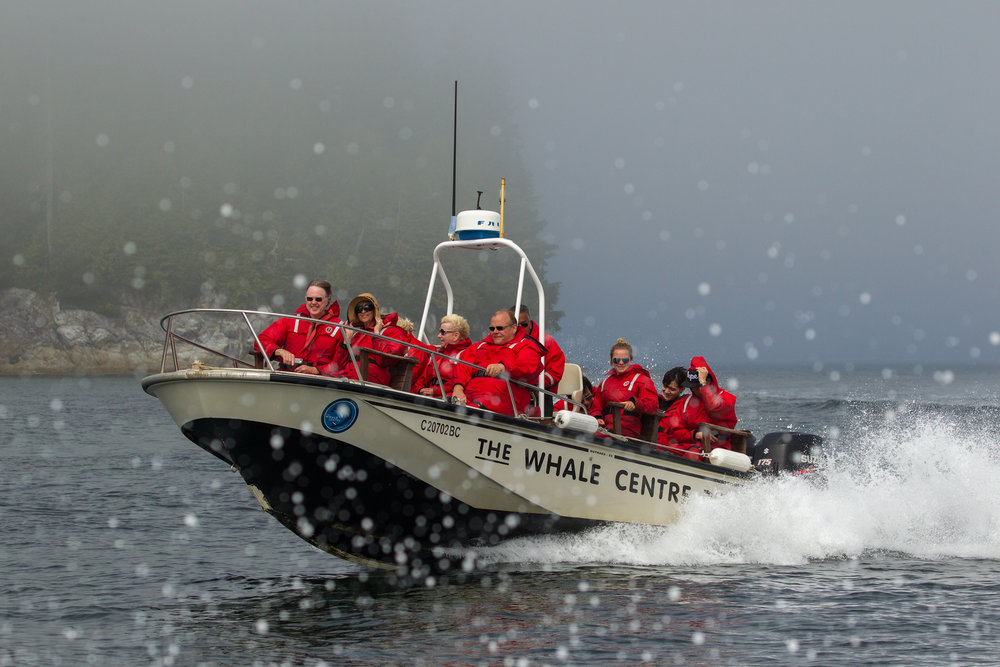 Tofino Whale Watching Tour