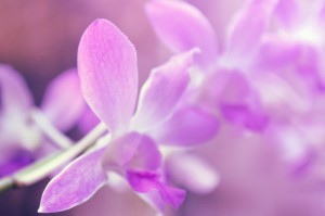purple_flowers_hires-300x199.jpg