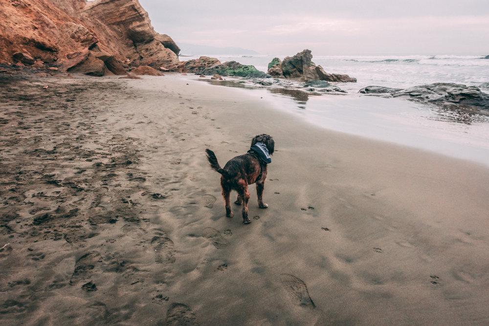 Gus Beach 3.jpg