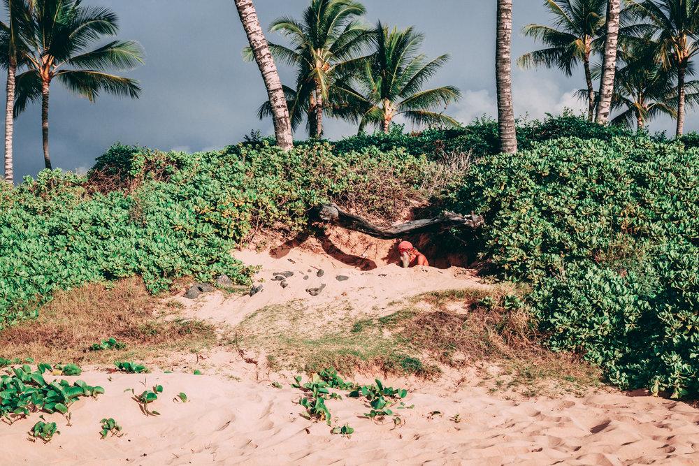Maui Escapism - BRB reality