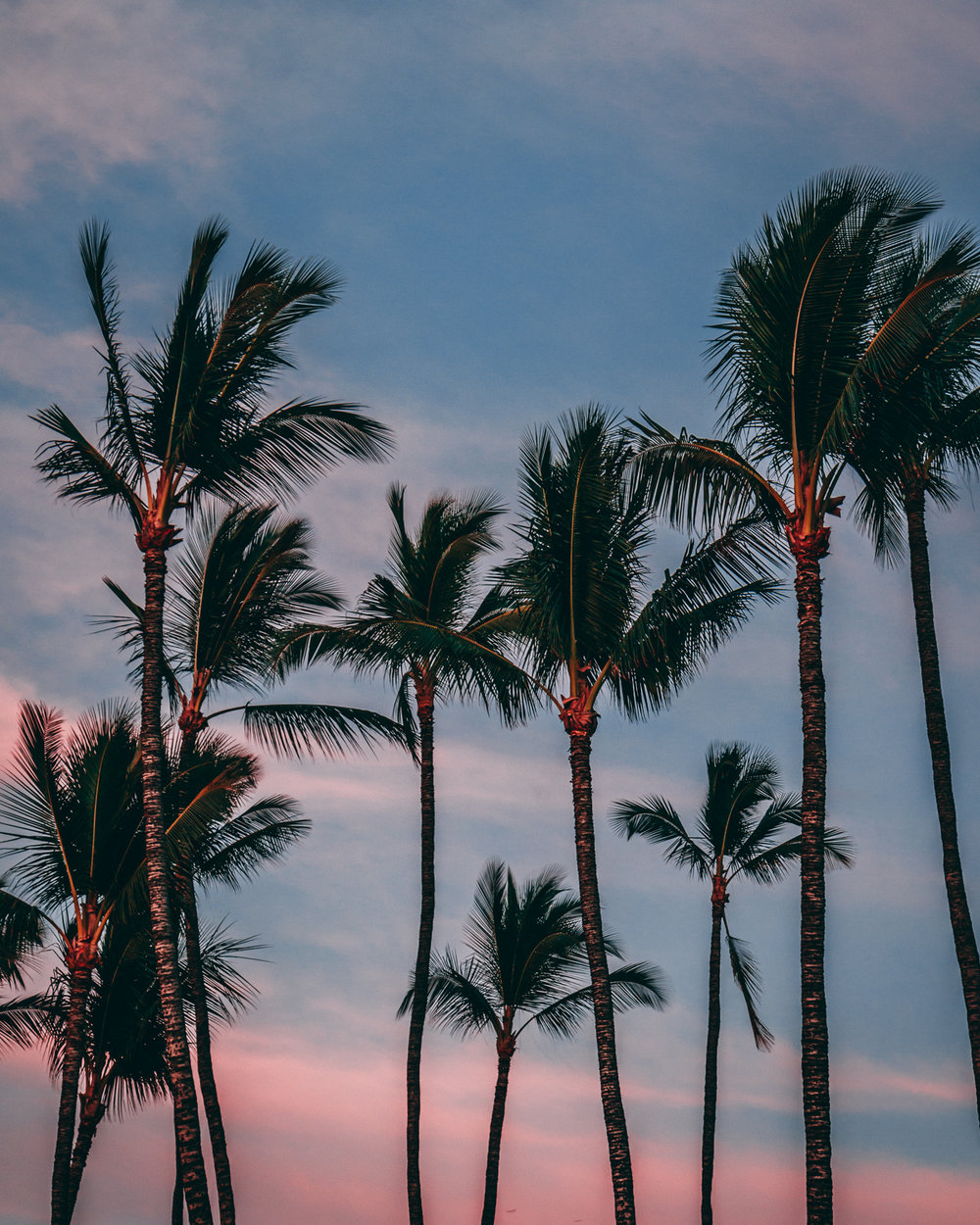 Jason Hendardy_Palm Trees.jpg