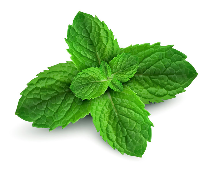 Peppermint  Antiseptic, Antibacterial. Freshens Breath, Pain Reliver, kills anaerobic bacteria that thrive in mouth.