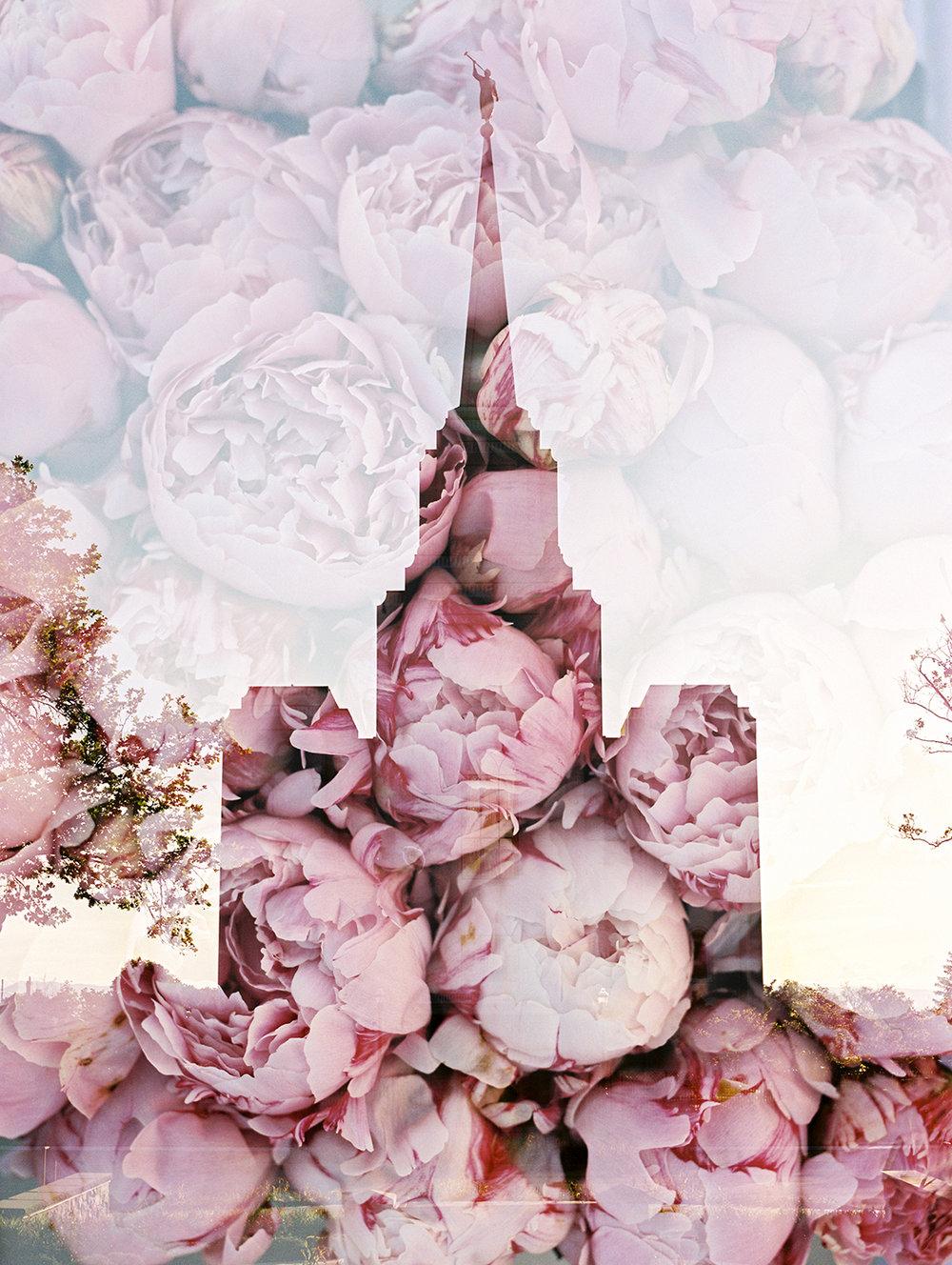 Brigham LDS Temple + Pink Peonies.jpg