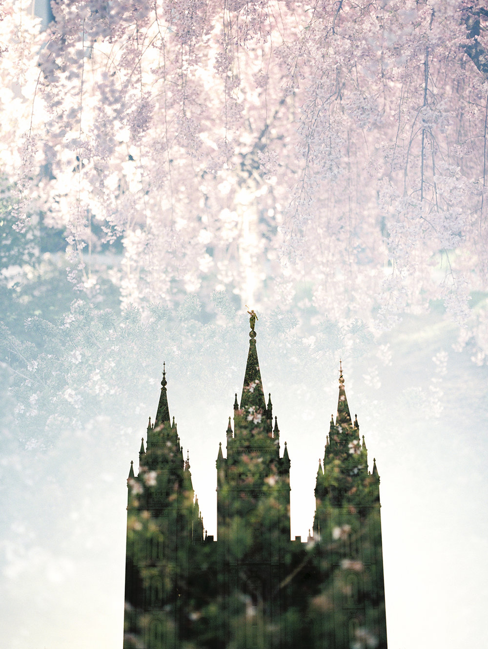 Salt Lake LDS Temple + Spring Blooms 2.jpg