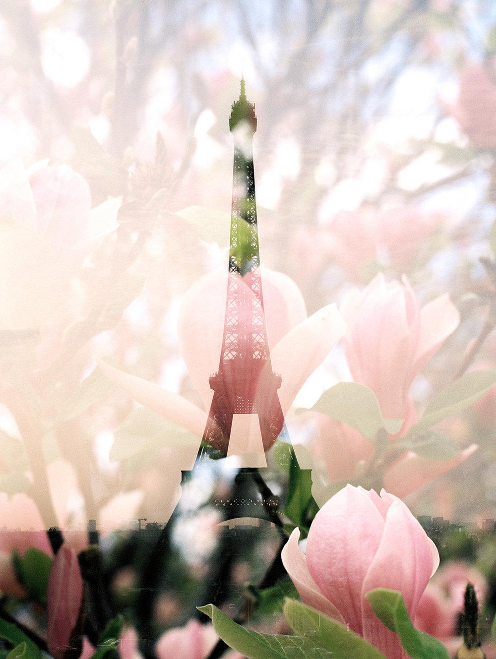 Eiffel Tower + Magnolias.jpg