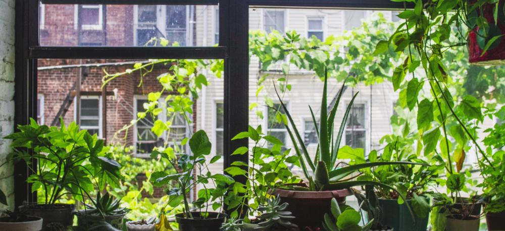 4 incredible health benefits of having indoor plants - By: Dominica Reid