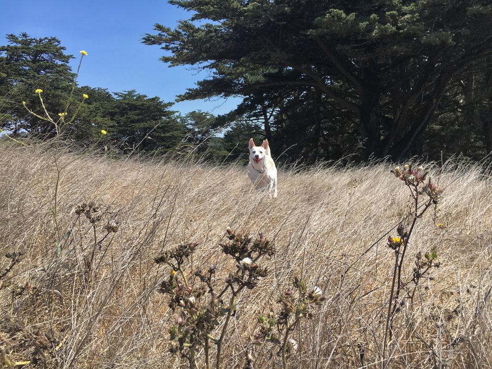 Dog SF Dog Walking San Francisco