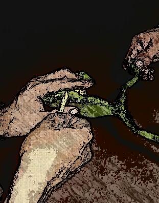Extracción del perjudicial veneno del sapo