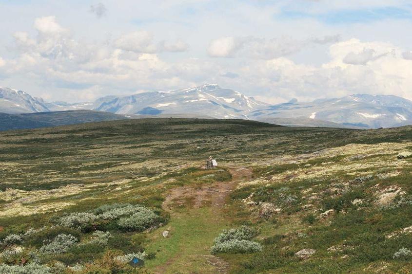 Dovrefjell nasjonalpark - Besøk en av Norges vakreste nasjonalparker.