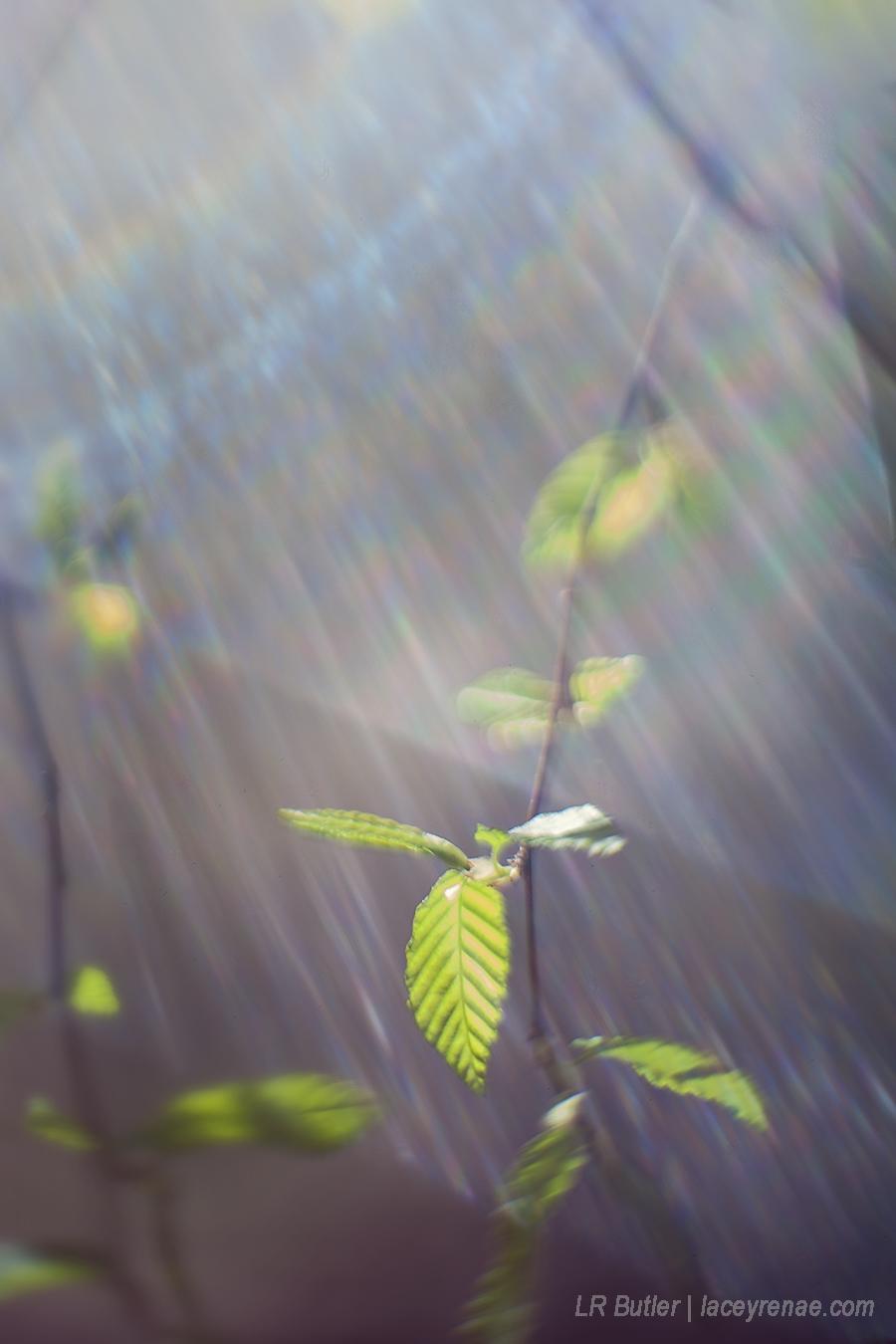 leaves sm.jpg