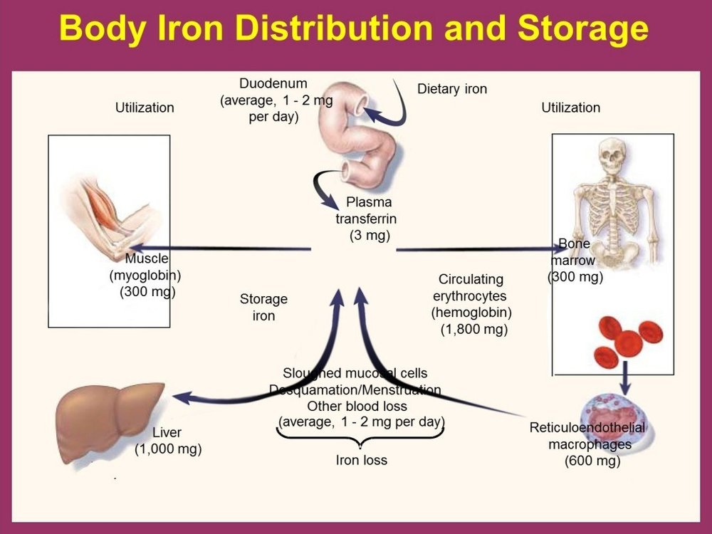 Figure 2 – The significance of iron.