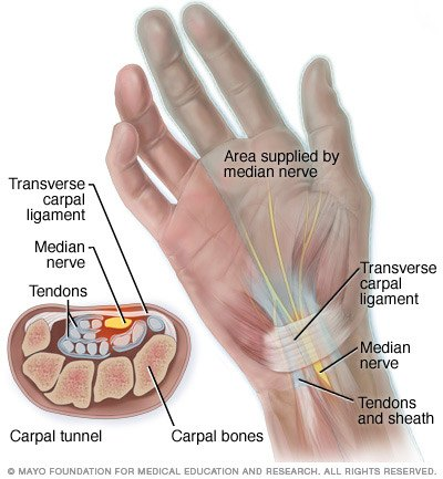 Figure 2 – Anatomy of carpal tunnel.
