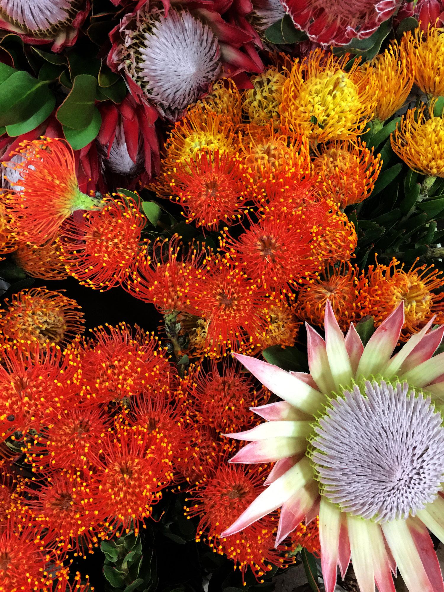 ahr florals protea
