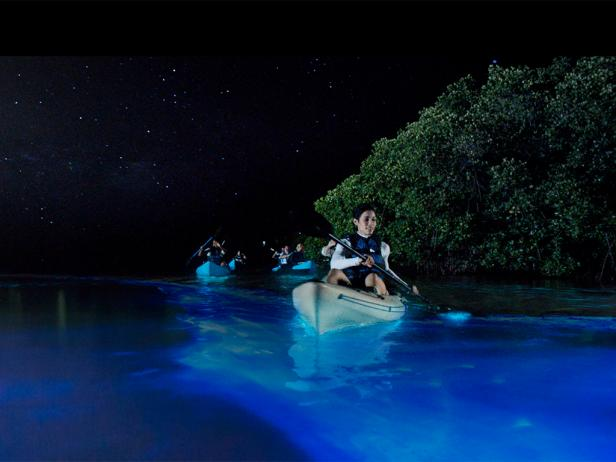 Puerto Rico was blessed with 3 Bioluminescent Bays, the brightest is  Mosquito Bay  here in  Vieques!