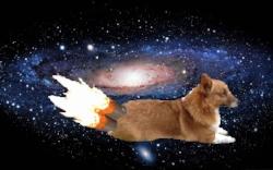 Space Corgi4.jpg