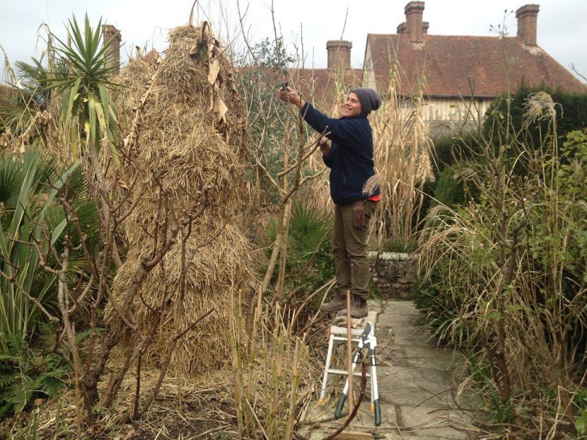 Maria pruning in the exotic garden