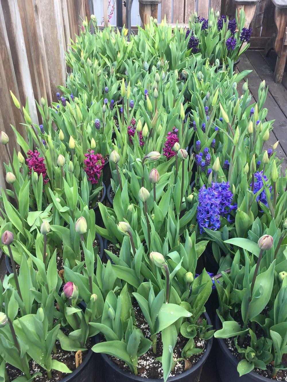 Pots arrayed on my deck