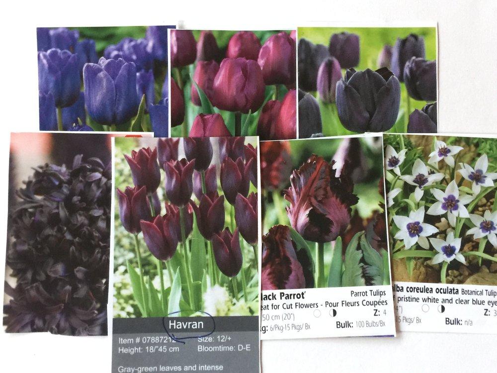 dark tulip mix