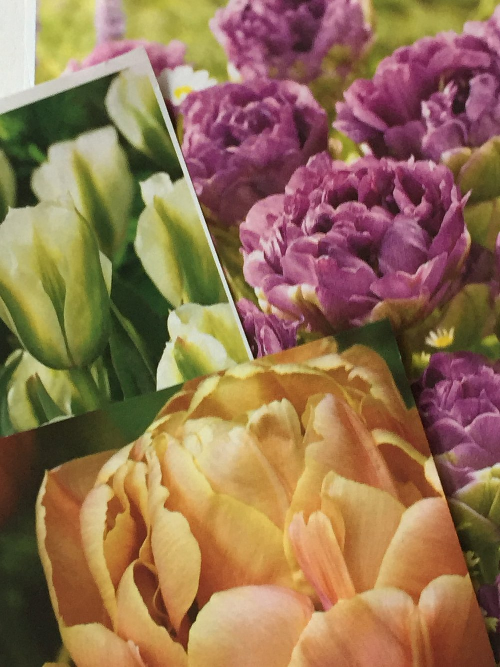 Sarah Raven tulip mix
