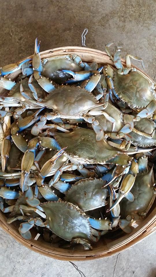 crabs-no1.jpg