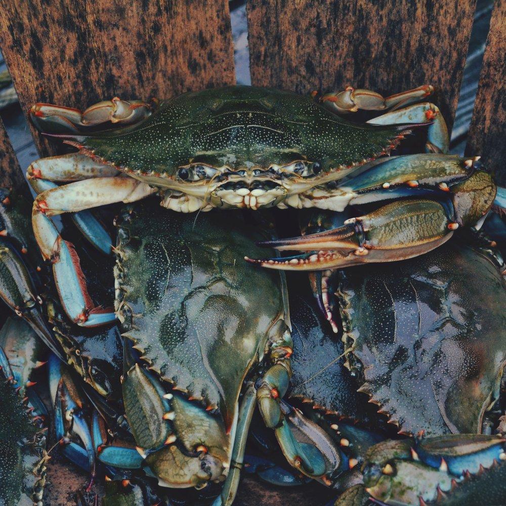 crab-stockphoto.jpg