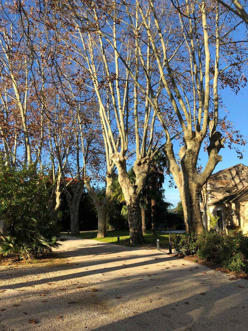 iria degen interiors chateau-de-montcaud france_02.jpg