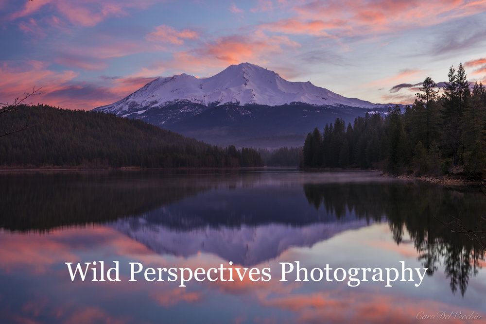 Wild Perspectives Photography