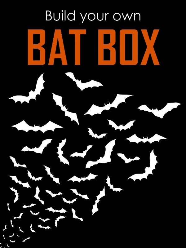 Bat Box Building - website promo image.jpg