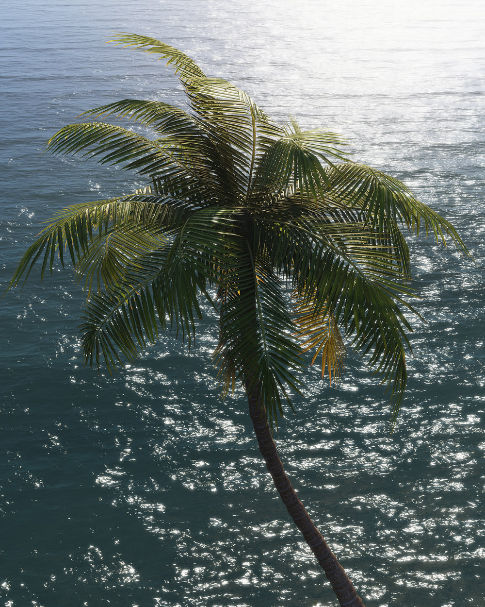 Palm 2017.03.20 - 10.14.17.79_web.jpg