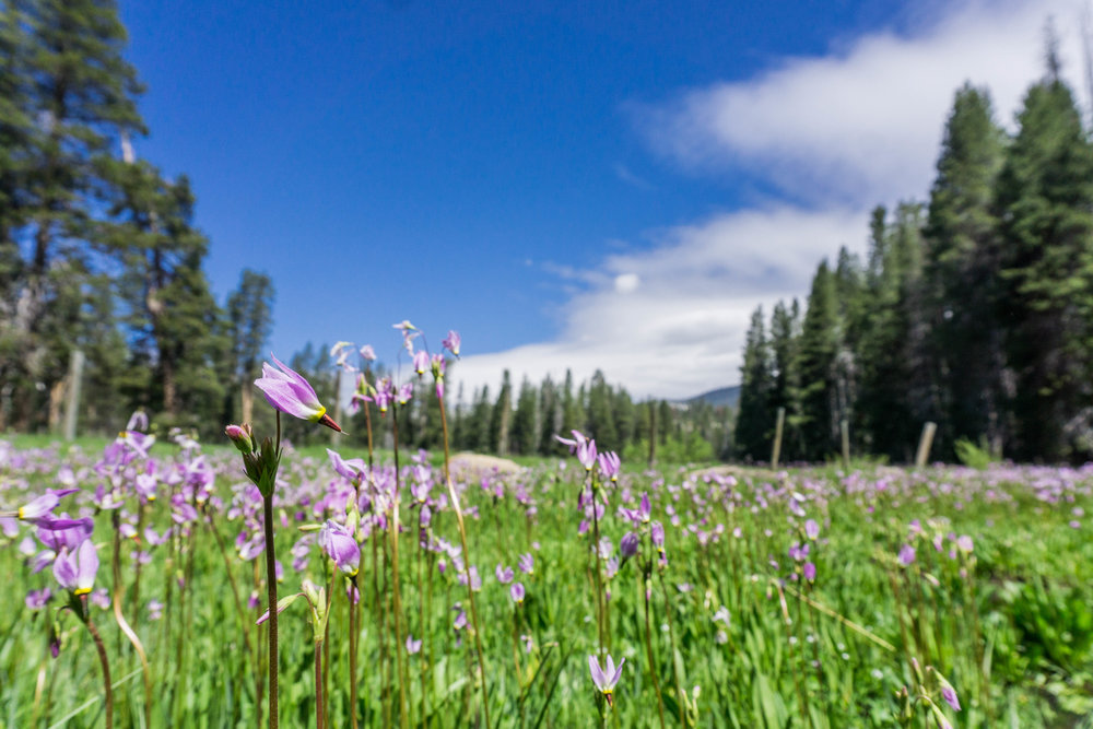 JACKASS MEADOWS PHOTO BY KIM LAWSON - VISIT YOSEMITE | MADERA COUNTY