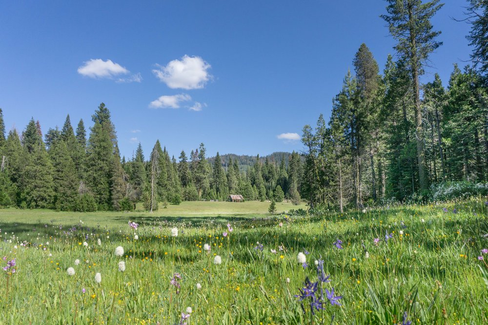 BEASORE MEADOW PHOTO BY KIM LAWSON - VISIT YOSEMITE | MADERA COUNTY
