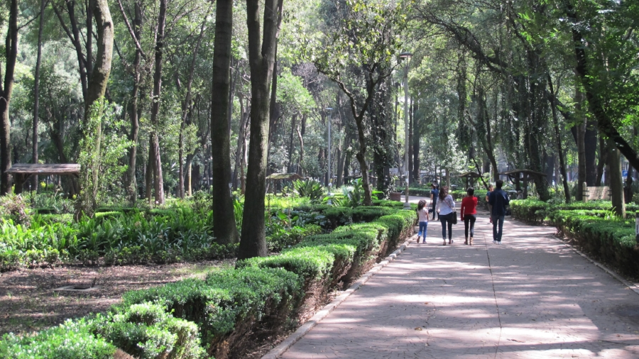 Walking along the Bosque de Chapultepec near La Condesa