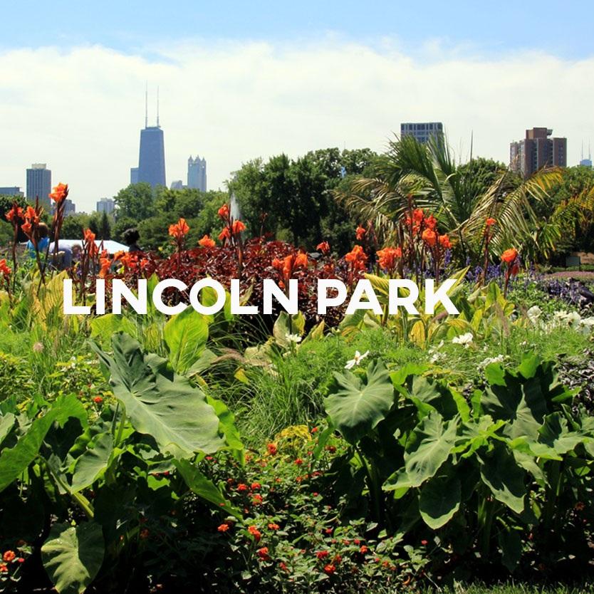 Lincoln+Park+Cover.jpg